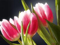 Flowers by ikarus