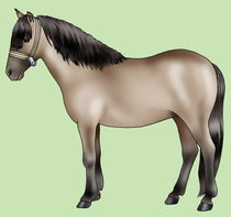 Pony breeds: Sorraia by William Rossin