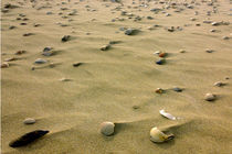 Shells on the sand von Lorenzo Parma