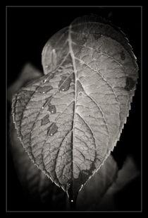 Wettysh leaf by Alexandru Busuioc