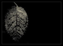 Leaf in the dark by Alexandru Busuioc