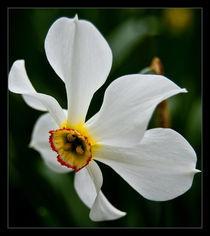 Pure white by Alexandru Busuioc