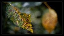 A half leaf by Alexandru Busuioc