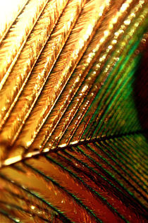 Abstract peacock feather by Lubelle Uden