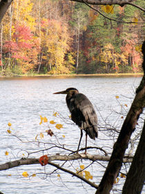 blue heron2 by Martha Abell