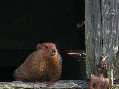Groundhog9