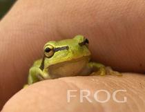Little frog by Grzegorz Stepnik