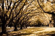Autumn by Mariana Savi
