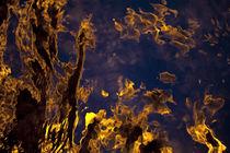Sea Light I by Eiko Fried