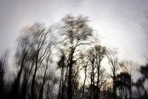 The Secret Forest I by Eiko Fried