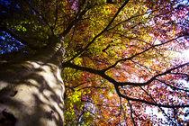 01-the-old-giant-tree-fullsize