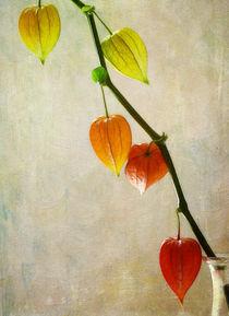 Herbstreife by Franziska Rullert