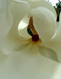 Magnolia-01