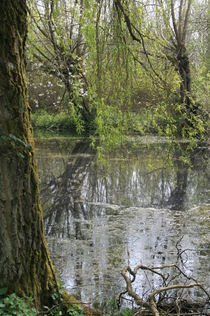 Willow On The Pond by Theo Ellis