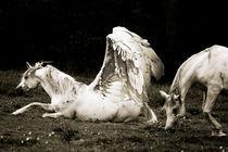 Pegasus Resting von Lubelle Uden