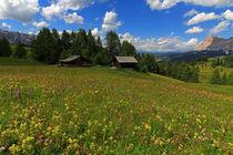 Blumen und Berge by Wolfgang Dufner