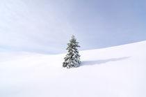 Alone von Ivan Coric
