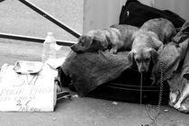 Street Pups by Aïsha van der Meulen