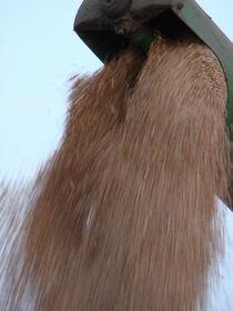 Getreideernte by Ka Wegner