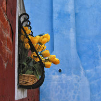 Tulips in Burano by Maddalena Gemma