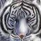 Ice-tiger-by-haysart-d3kghfj