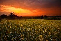 Detuschland / Germany 04 - Feuriger Sonnenuntergang / Fiery Sunset von Johannes Ehrhardt