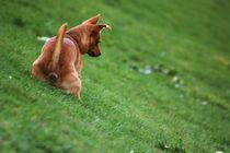 Dog I von gokinka