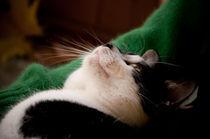 Buzias cat by Dana Marza