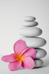 Frangipani Zen von Alex Bramwell