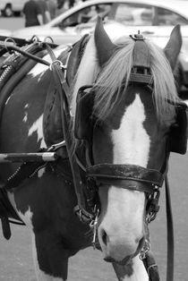 NYC pony von Aimie Robinson