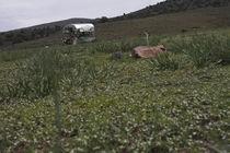 Sierranevada-082