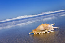 Seashell4-feb11-2011