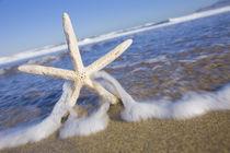 Beach Starfish von Alex Bramwell