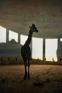 giraffe von Anastasia Agafonova