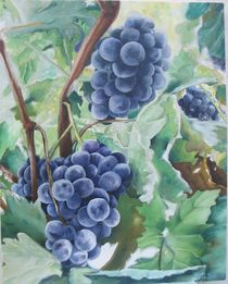 Grapes in the mornig by ana-jacob