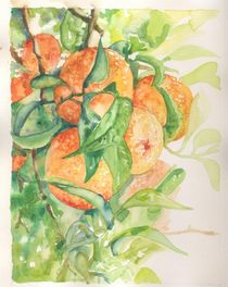 oranges by ana-jacob