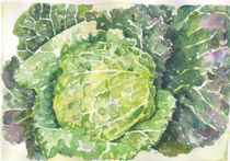 cabbage by ana-jacob