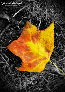 Lonely leaf by Jessica Montanelli
