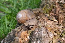Snail by ektrom