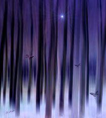 Mystic Forest by Eckhard Röder