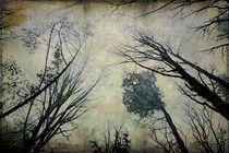 Cold Mystery von Helen K. Passey