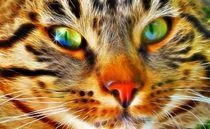 Katze23