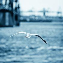 sea gull von Philipp Kayser