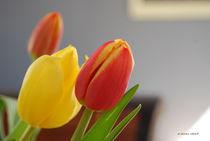 Tulpen_001 von E. Axel  Wolf