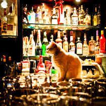 cat(ches rats) in a bar von Philipp Kayser