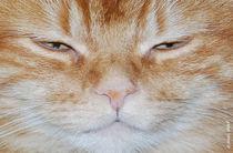Katze blinzelnd von E. Axel  Wolf