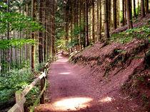 Waldweg by Cornelia Greinke
