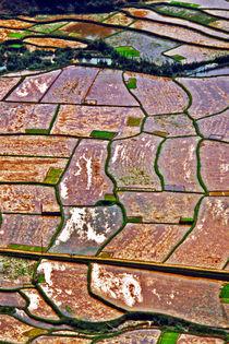 Reisfelder - Nordvietnam von captainsilva