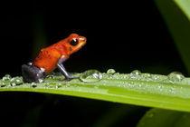 Basco-artflakes-rainforest-25