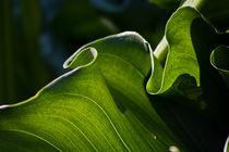 Green Ruffles by Helen K. Passey